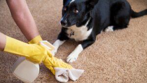 Πώς να καθαρίσω τρίχες και ακαθαρσίες του κατοικίδιου μου από το χαλί μου;